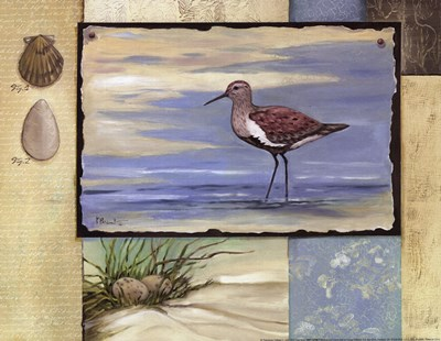 Sandpiper Collage II mini Poster by Paul Brent for $12.50 CAD