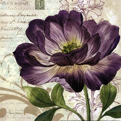 Study in Purple II -mini Poster by Pamela Gladding for $12.50 CAD