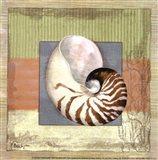 Montego Nautilus- petite