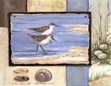 Sandpiper Collage I - mini
