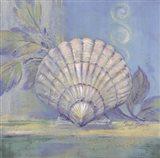 Tranquil Seashell IV