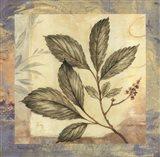 Leaf Botanicals III