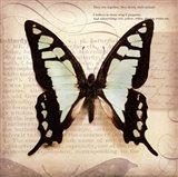 Butterflies Script I - mini