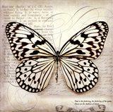 Butterflies Script III - mini