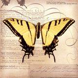 Butterflies Script V - mini