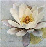 Magnolia Sq.
