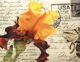 Carte Postale Iris
