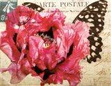 Carte Postale Poppy