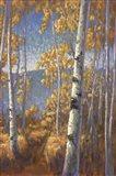 Aspen Forest II