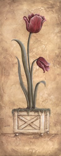Regal Tulip Poster by Kate McRostie for $13.75 CAD