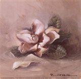 Sunlit Magnolia