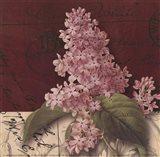 Postcard Lilac