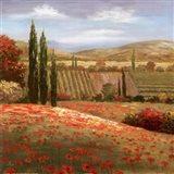 Tuscan Cypress I