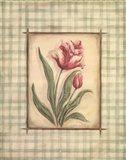 Gingham Tulip