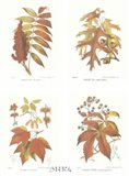 Leaves (Set of Four)