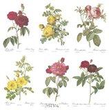 Roses (Set of Six)