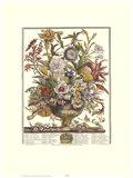 September/Twelve Months of Flowers, 1730