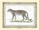 Leopard framed