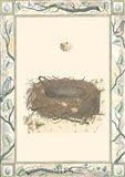 Woodland Nest II