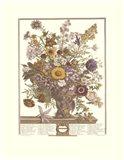 November/Twelve Months of Flowers, 1730