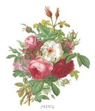 Antique Roses