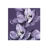 Mauve Orchid #2