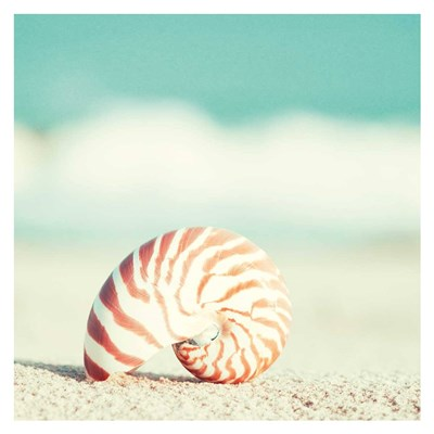 Nautilus Poster by Carolyn Cochrane for $88.75 CAD