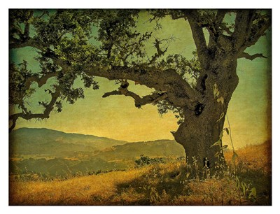 Blue Oak Hilltop Poster by William Guion for $78.75 CAD