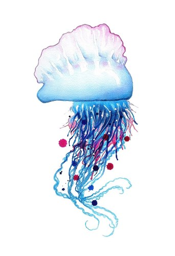 Man o'War Jellyfish Poster by Sam Nagel for $85.00 CAD
