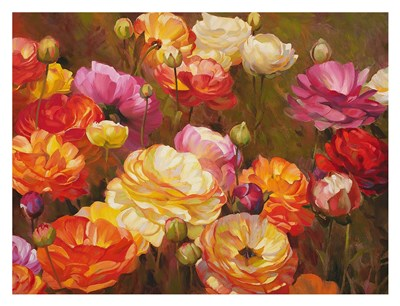 Ranunculus Garden Poster by Emma Styles for $78.75 CAD