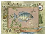 Blue-Gilled Sunfish