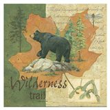 Wilderness Bear