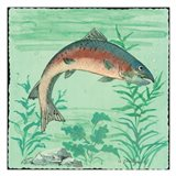 Trout Swimming I