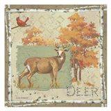 Deer / Deer / Elk