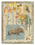 Moose and Aspens