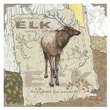 Elk Walk