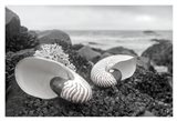 Crescent Beach Shells 2