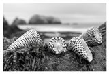 Crescent Beach Shells 3