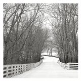 Country Lane in Winter