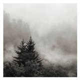 Rising Mist, Smoky Mountains