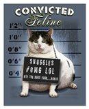 Convicted Feline