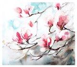 Magnolia, Spring