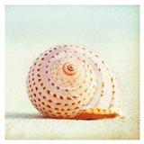 Seashell Voices