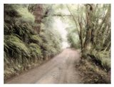 Lost Coast Road