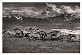Mountain Range Mavericks
