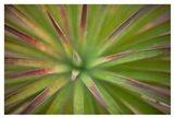 Arizona Monocot