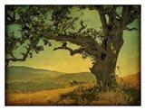 Blue Oak Hilltop