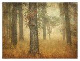 Oak Grove in Fog