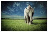 Elephant Carry Me