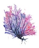 Sea Fan - Purple